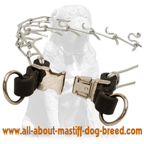 Durable chrome plated pinch dog collar