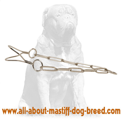Comfortable metal collar for dog shows