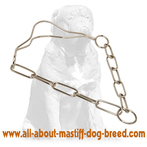 Rust-proof chrome plated show dog collar