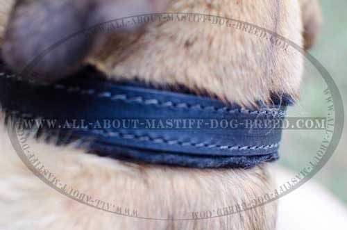 Agitation training dog collar made of thick leather