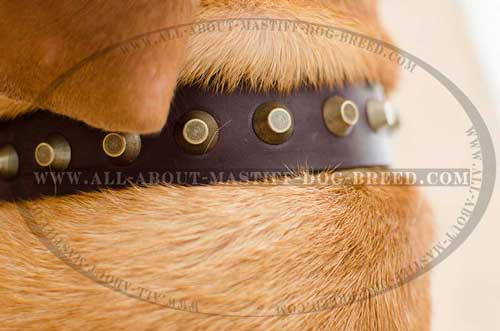Chic leather dog collar with stainless fittings