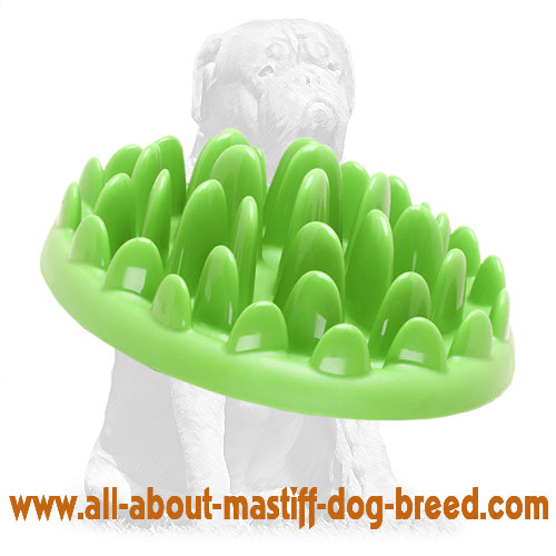 Absolutely safe and non-toxic dog plastic plate