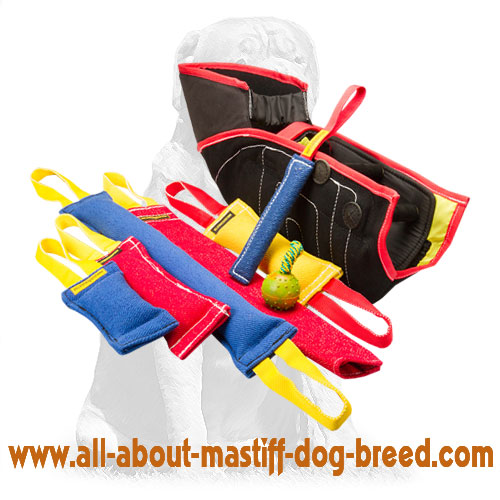 Efficient training dog set with different items