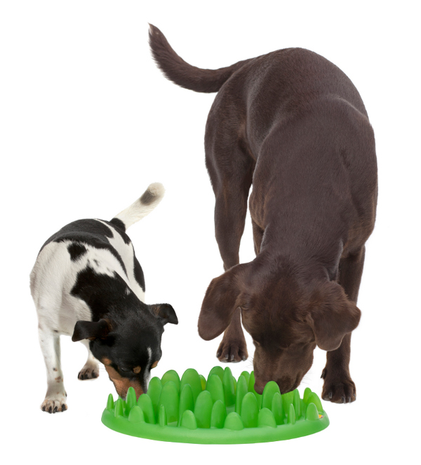 Easy in use green grass dog feeder
