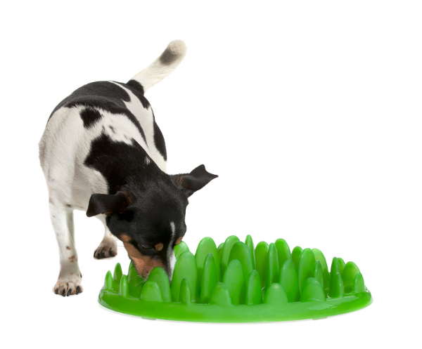 Practicable green grass dog feeder