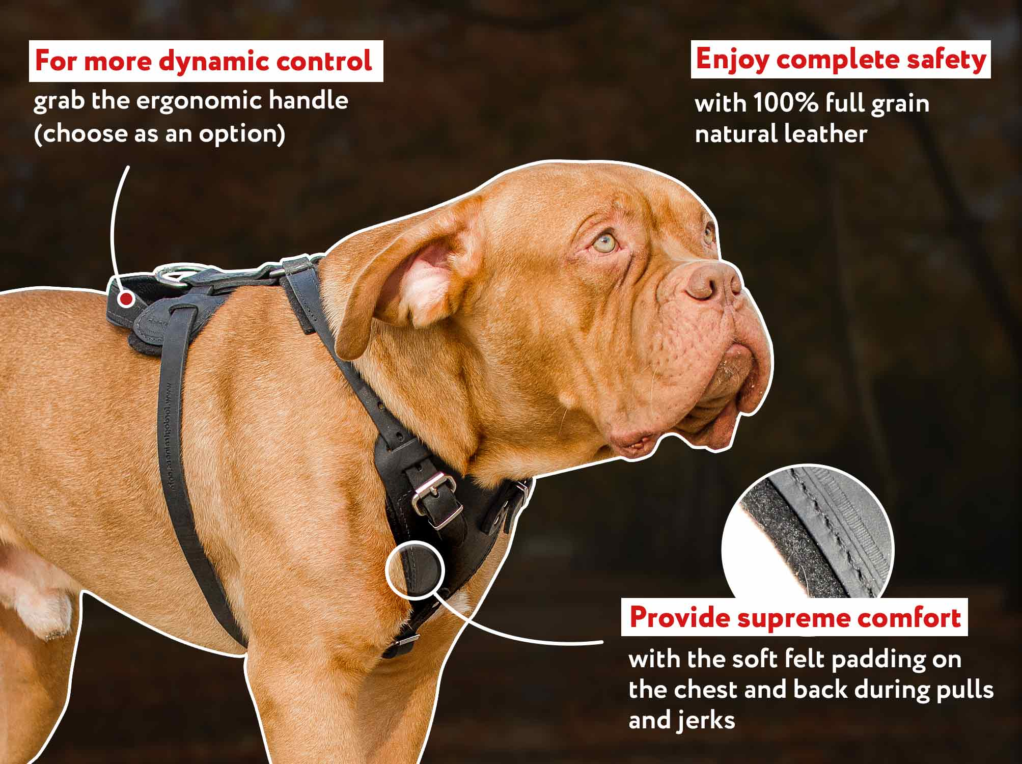 Working/Best Leather Dog Harness for French Mastiff