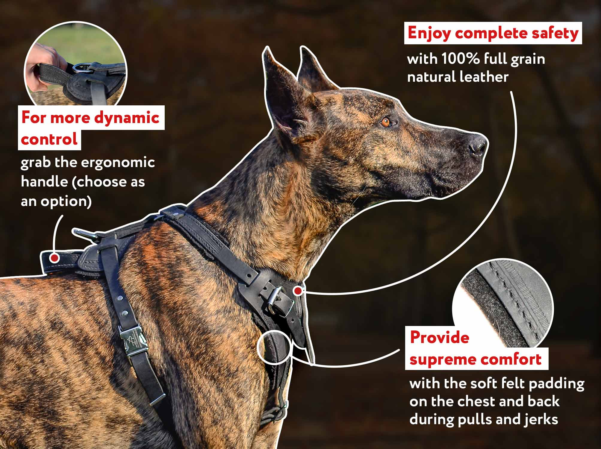 German Mastiff Leather Harness for Training and Walking