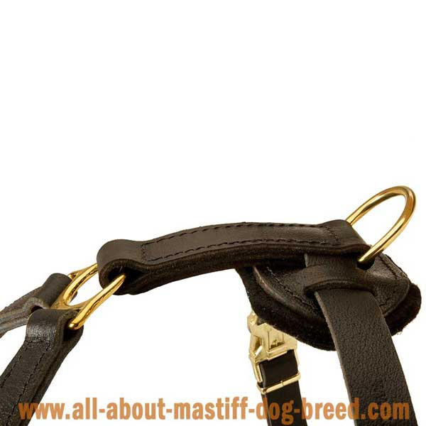 Practical leather harness with tough hardware