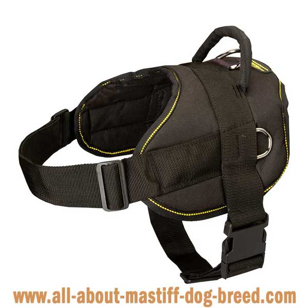 Multifunctional harness for Argentinian Mastiff with quick release buckle