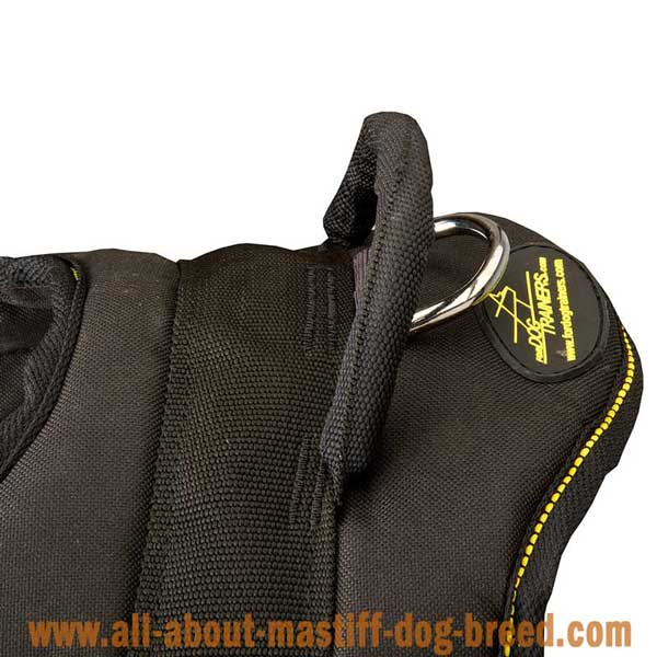Lightweight nylon Argentinian Mastiff harness with handle