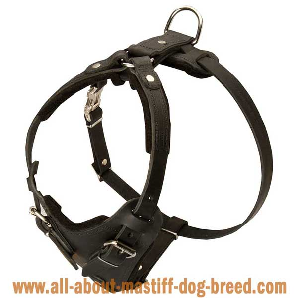 Boerboel Mastiff Leather Harness Felt Padded