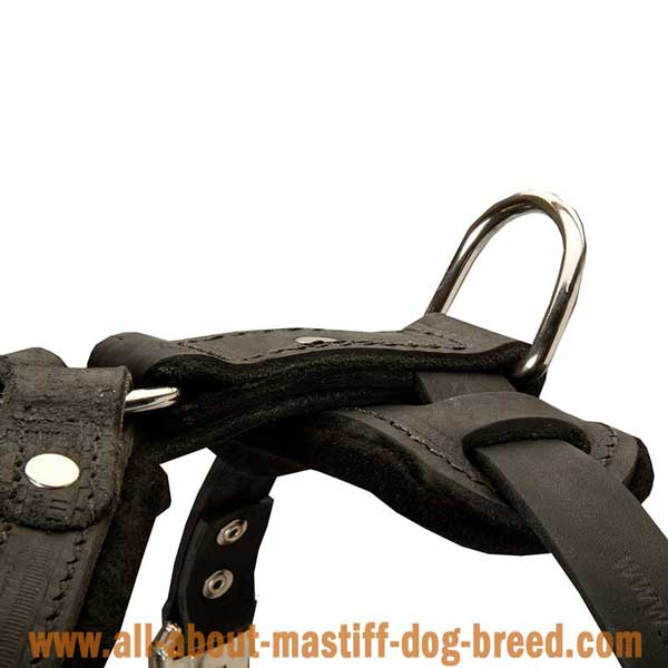 Boerboel Mastiff Leather Harness with Rust Resistant Hardware