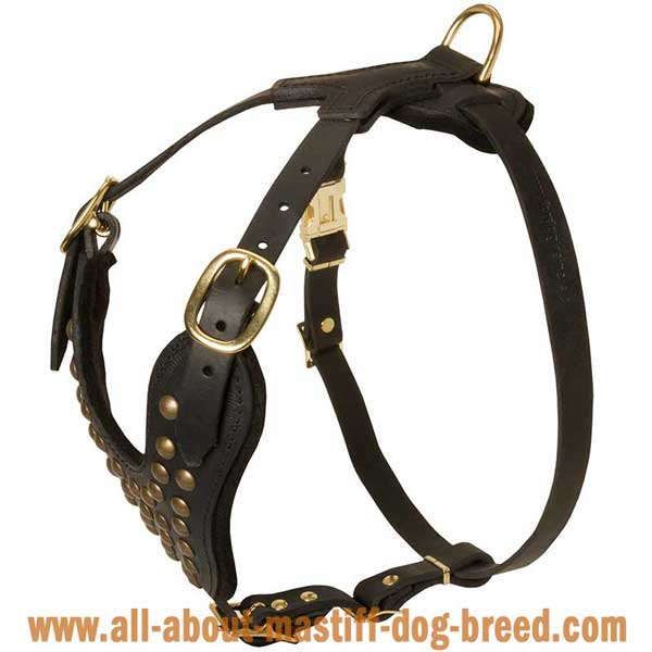 Beautifully designed studded leather harness for Boerboel Mastiff