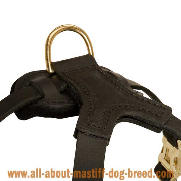 Reliable leather Boerboel Mastiff harness with wide straps