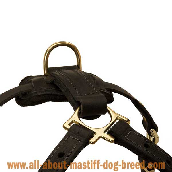 Bullmastiff Dog Harness Leather with Brass Fittings