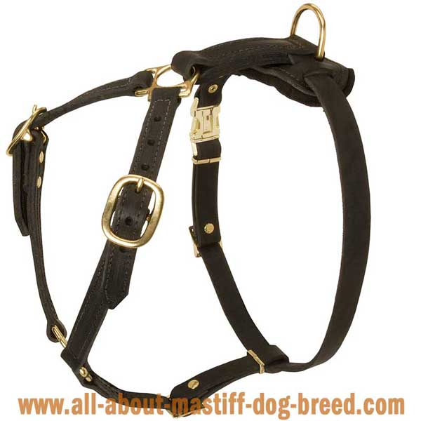 Bullmastiff Dog Harness Made of Leather with 4 Adjustable Straps