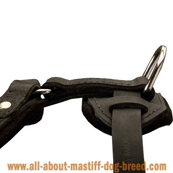 Bullmastiff Leather Harness with Rust Resistant Hardware