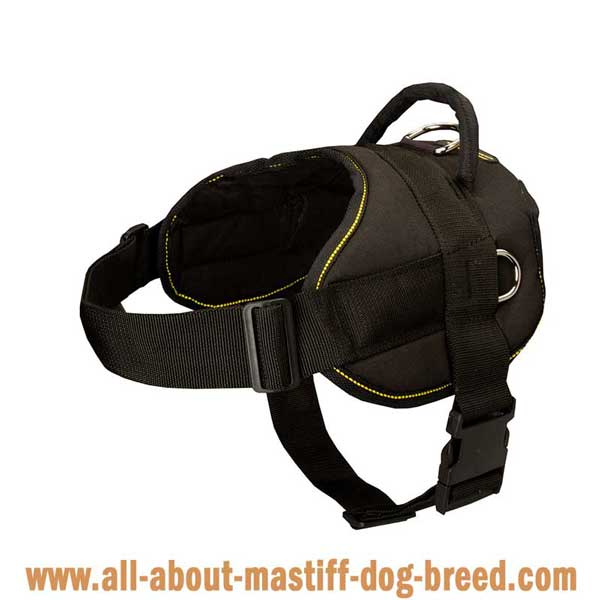 Lightweight Bullmastiff harness for tracking/pulling work