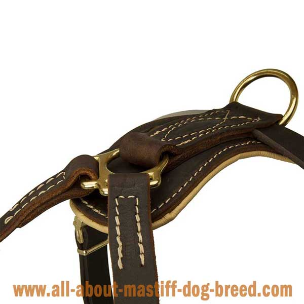 Cane Corso Leather Harness with Rust Resistant Hardware