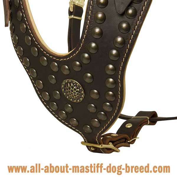 Cane Corso Leather Harness with Brass Studs and Brooch