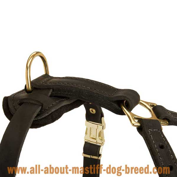 Cane Corso Mastiff Dog Harness Leather with Durable Brass Hardware