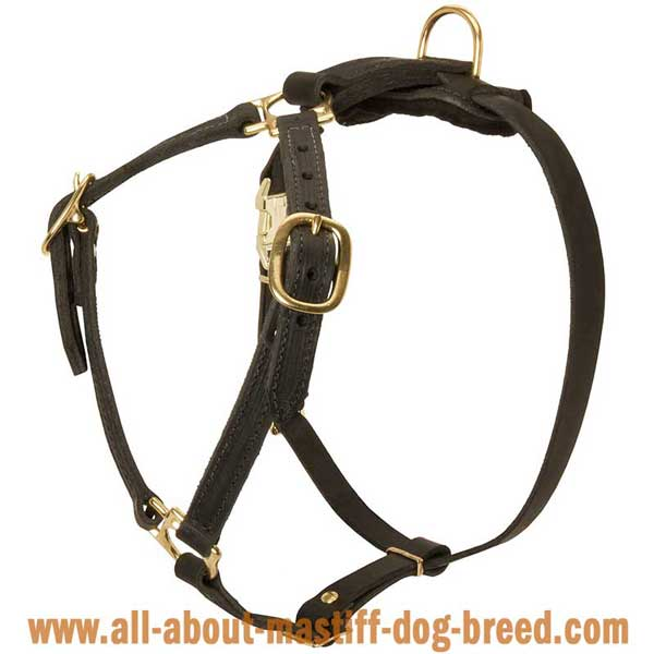 Cane Corso Mastiff Dog Harness Leather with 4 Adjustable  Straps