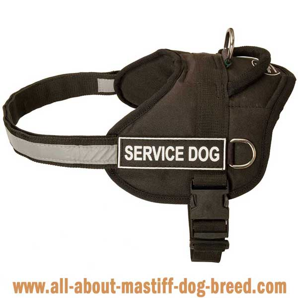 Cane Corso Nylon Harness for Safe Walking