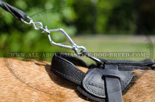 Cane Corso harness provides easy leash attachment