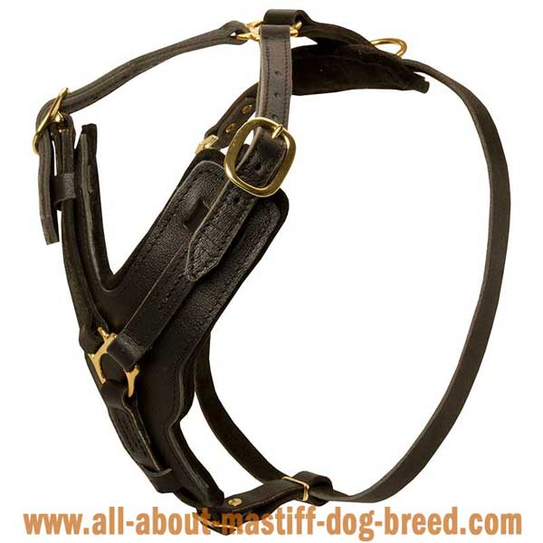Leather Cane Corso harness with padded Y-shaped chest  plate