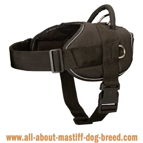 Reflective Cane Corso harness with white trim
