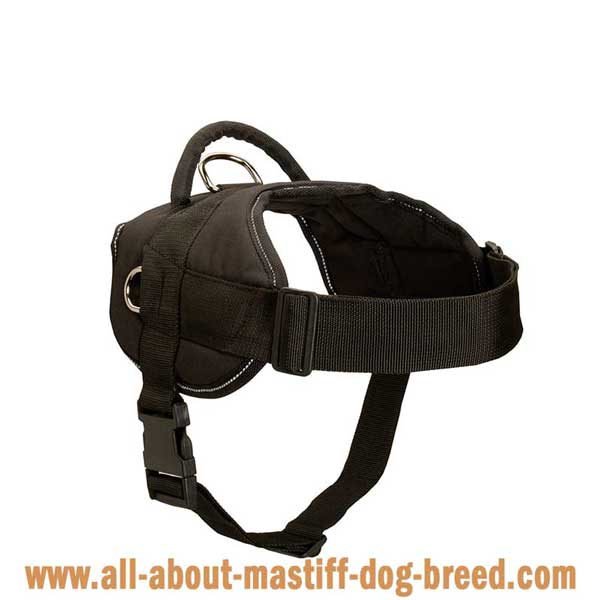 All weather Cane Corso harness with comfortable wide straps