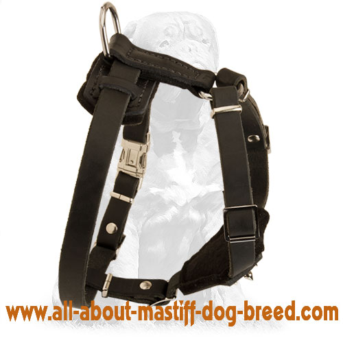 Soft felt padded leather dog     harness
