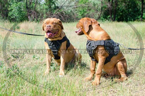 Dogue-De-Bordeaux nylon harness intended for different purposes