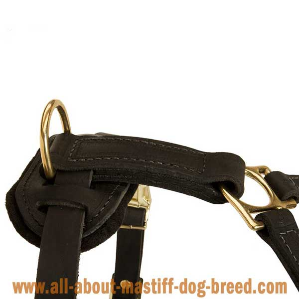 English Mastiff Dog Harness Leather with Strong Brass Fittings