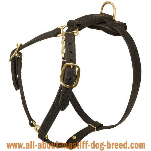 English Mastiff Dog Harness Made of Leather with 4 Adjustable  Straps