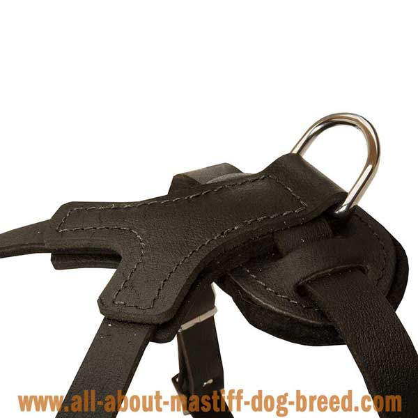 Hypoallergic Decorated Leather Harness for English Mastiff