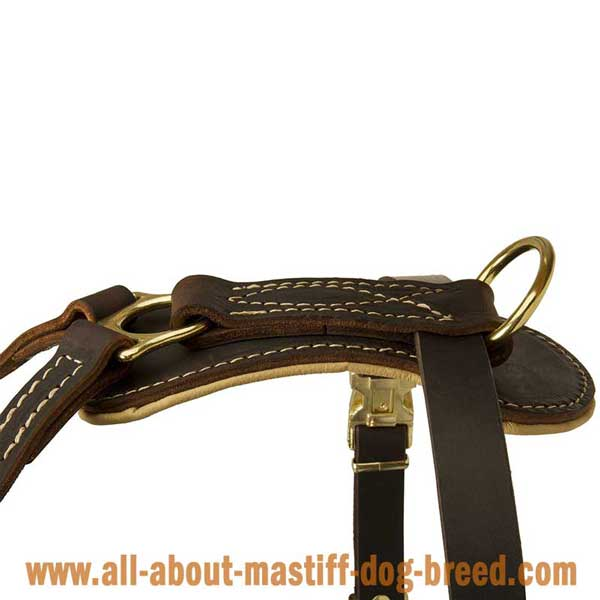 English Mastiff Leather Harness with Rust Resistant Hardware