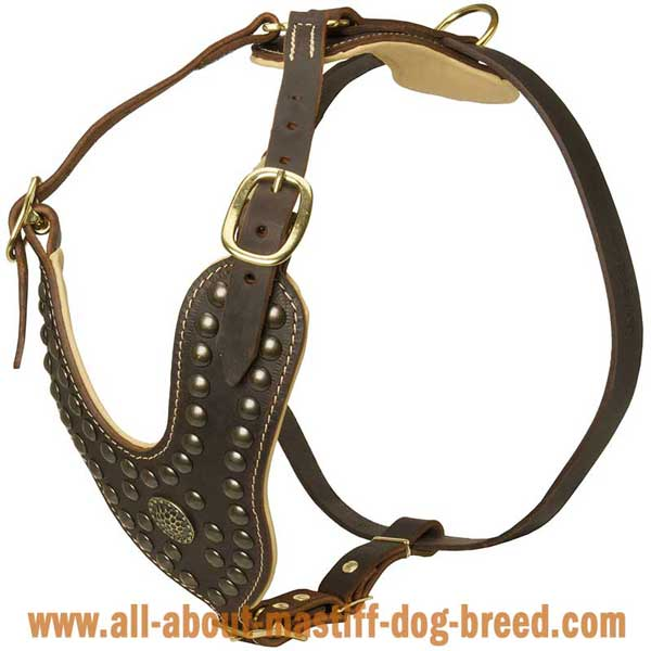 English Mastiff Leather Harness with Brass Studs and Brooch