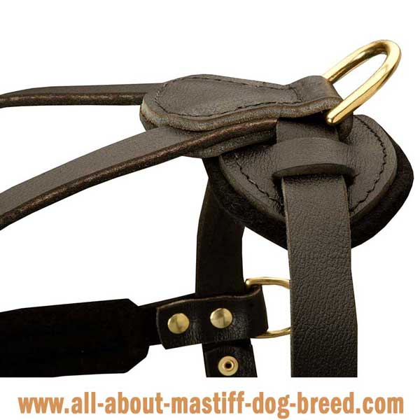 English Mastiff  leather harness with sturdy hardware