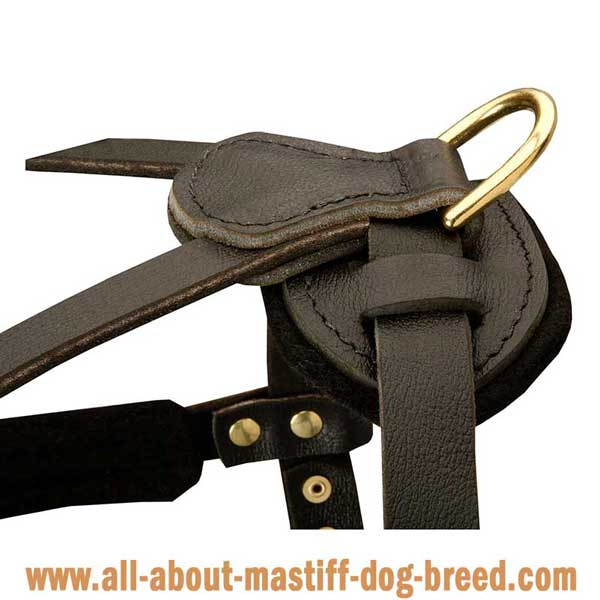 English Mastiff leather harness with side D-rings
