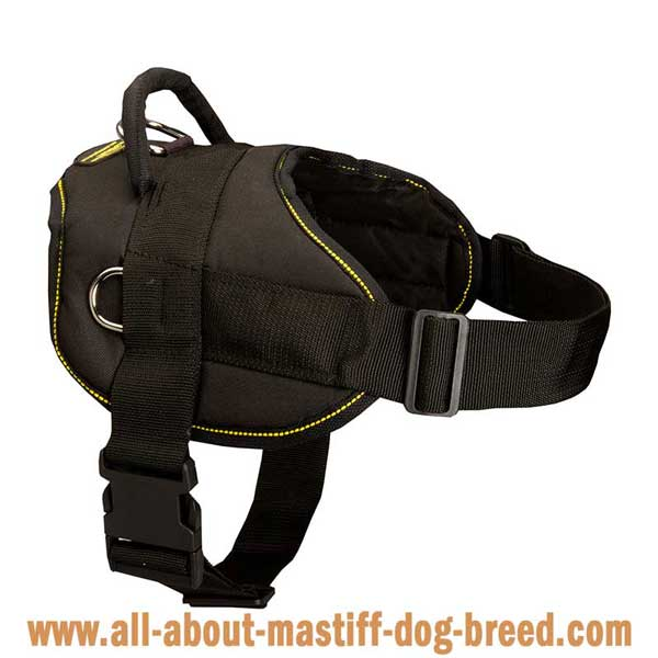 Functional nylon English Mastiff harness with additional D-rings