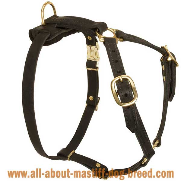 French Mastiff Dog Harness Leather with 4 Adjustable Straps