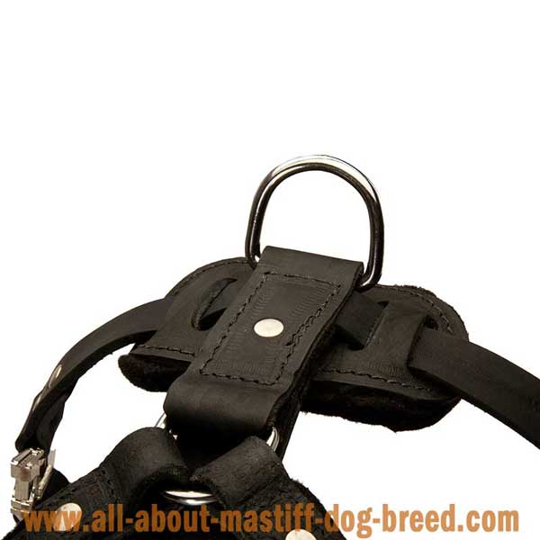French Mastiff Leather Harness with Rust Resistant Hardware
