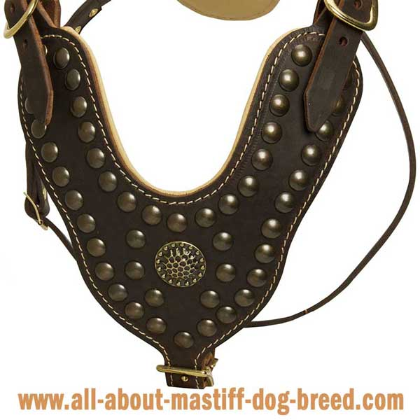 French Mastiff Leather Harness Stylish