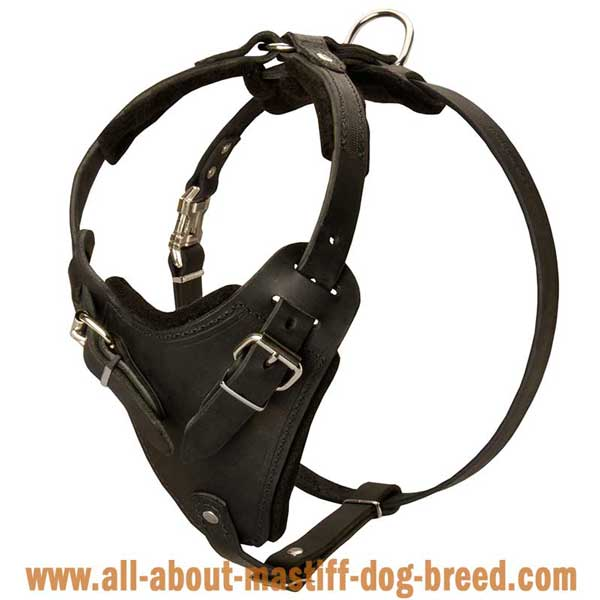 French Mastiff Leather Harness for Effective Training