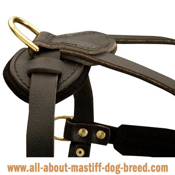 French Mastiff leather harness with extra side D-rings