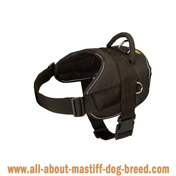 Lightweight nylon French Mastiff harness easy to adjust