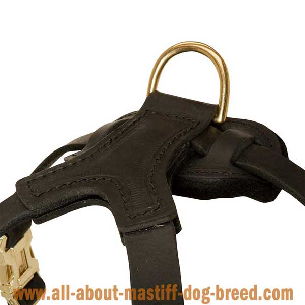 Awesome leather French Mastiff harness for walking in style