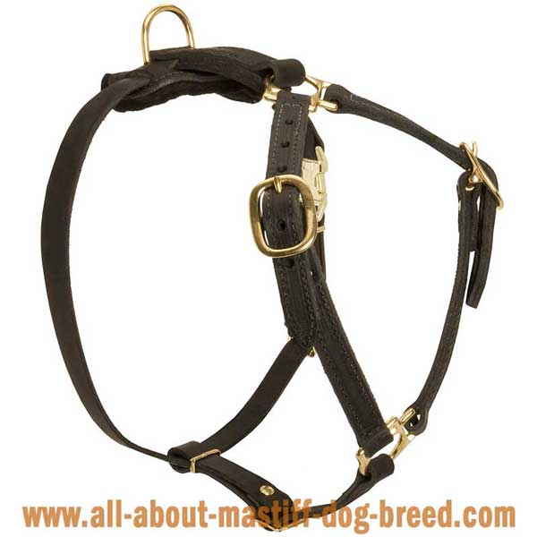 German Mastiff Dog Harness Leather with 4 Adjustable Straps