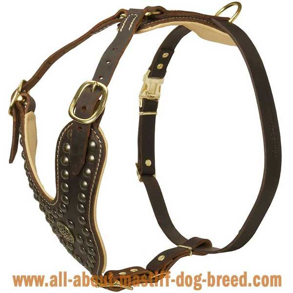 German Mastiff Leather Harness with Brass Studs and Brooch